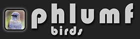 The Accidental Birder
